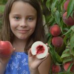 Win a Rayner's Farm Package for a Family of 4