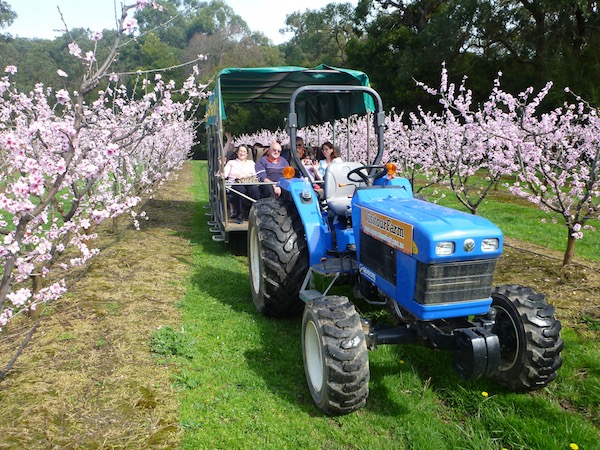 blossom-tractor-tours